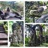 Лес обезьян.