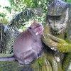 Лес обезьян. Друзья)