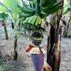 банановый остров