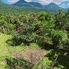 Кофейные плантации в окружении вулканов